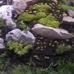 Альпийская горка на даче