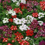 заполнение цветами