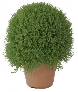Покупка растений