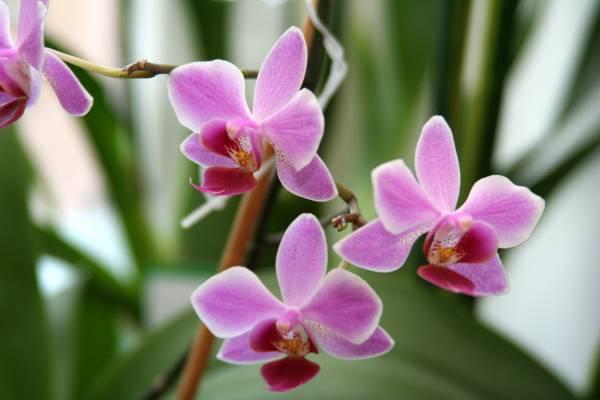 При правильном уходе орхидея будет ...: sad-forever.ru/uhod-za-domashney-orhideey