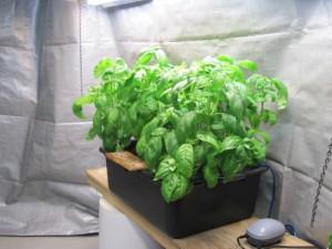 Гидропонная установка для выращивания рассады