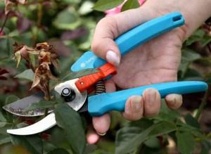 Как обрезать растения