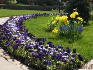Рабатка в саду