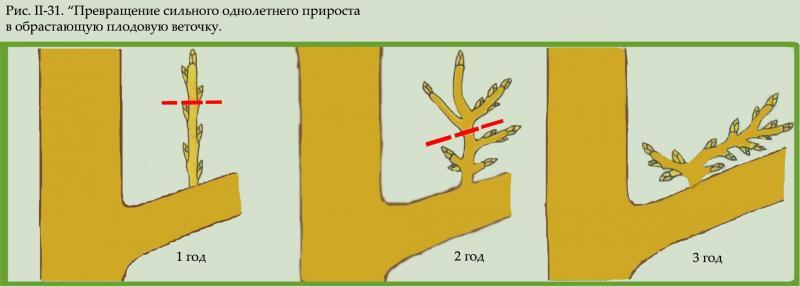 Пошаговая инструкция обрезки плодовых деревьев